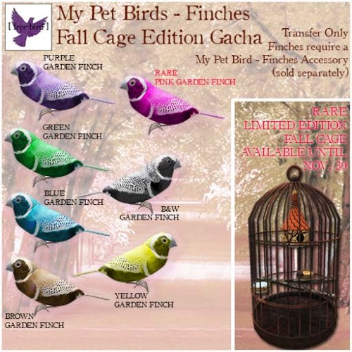 [ free bird ] My Pet Birds - Fall Cage Edition Ad