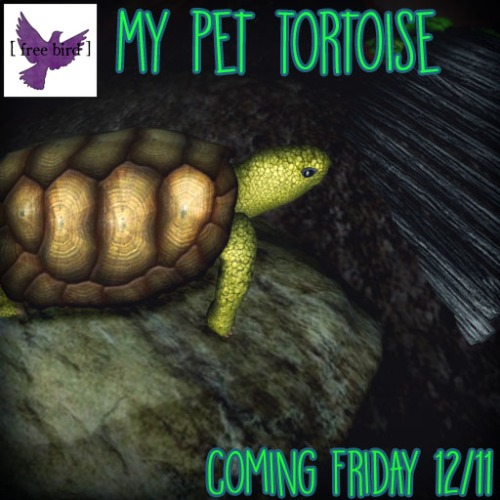 [ free bird ] My Pet Tortoise Coming Friday