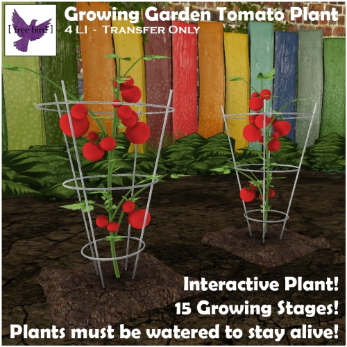 [ free bird ] Growing Garden - Tomato Plant Ad.jpg