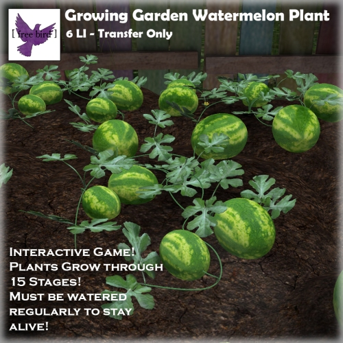 [ free bird ] Growing Garden- Watermelon Plant.jpg
