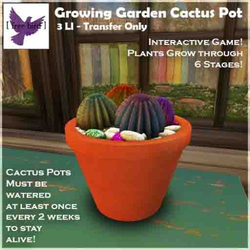 [ free bird ] Growing Garden Cactus Pot Ad Web