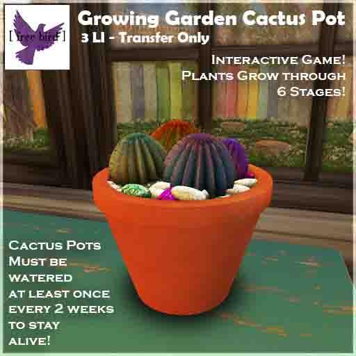 [ Free Bird ] Growing Garden Cactus Pot Ad Web